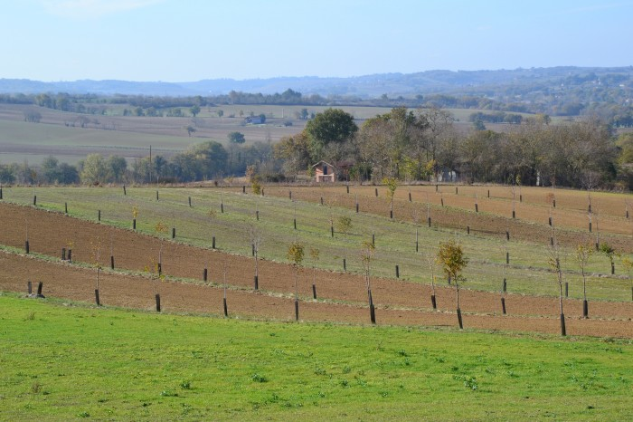 Noilhan paysage - Agroforesterie