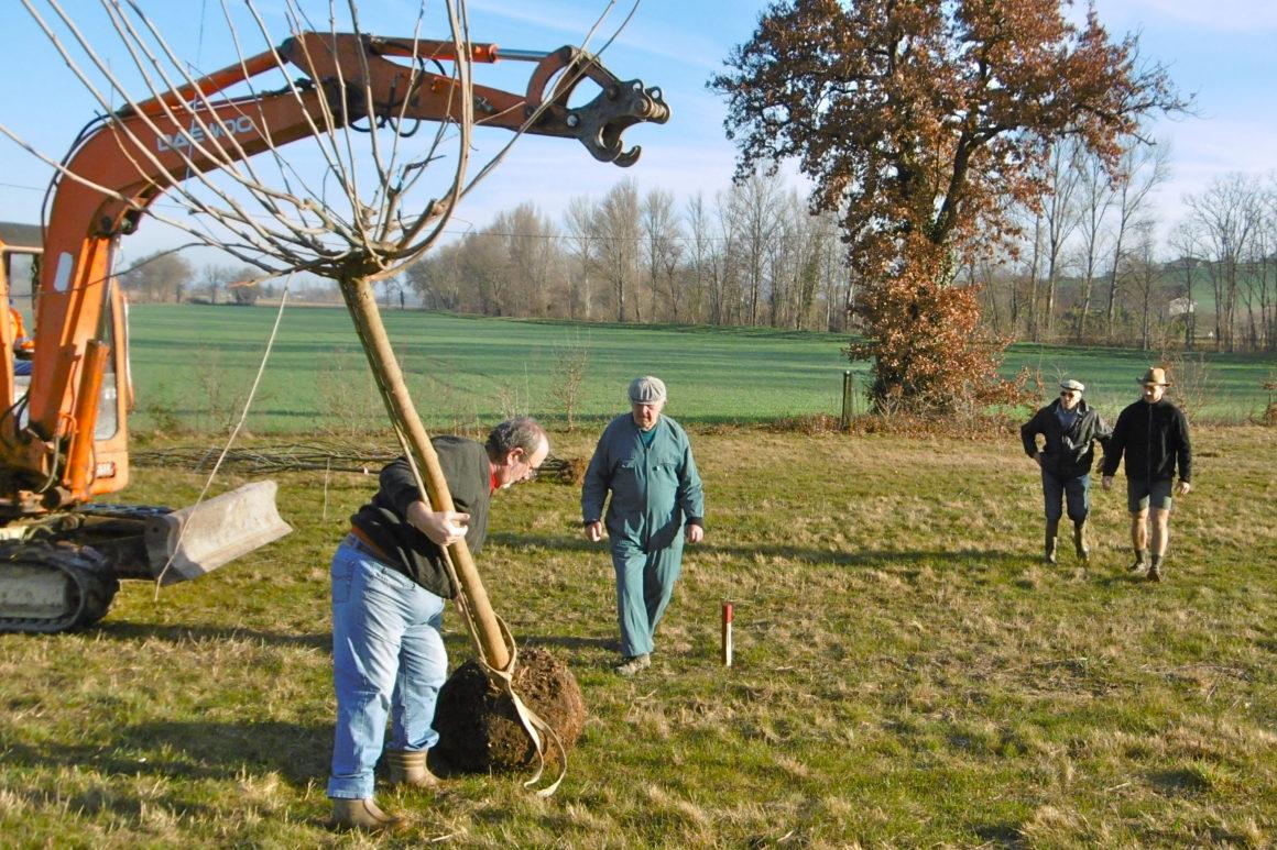 Plantation d arbres en attendant les tables de pique nique ccsav s32 - Plantation d arbres synonyme ...