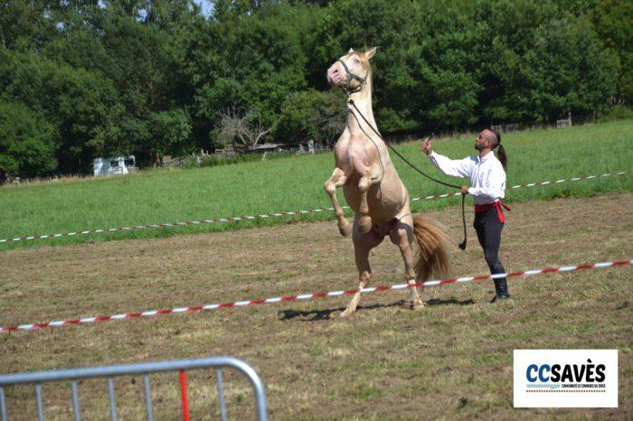 Lombez- Un été dans le Savès juillet 2021-2 - Le cheval de Joffrey de Peyrac